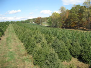 Greenway Farms Christmas Trees – Choose and cut tree farm in ...